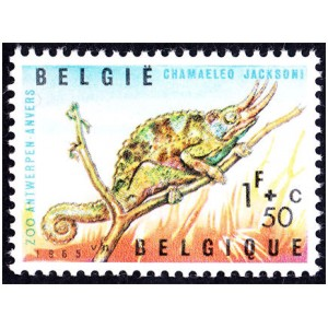 Belgie Belgique
