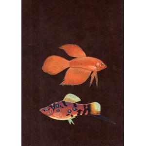 Jakubowski H, Ring J.: Ryby w akwarium