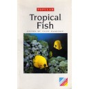 Harrison Cliff: Popular Tropical Fish for you aquarium