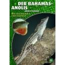 Zeilfelder & Bartelt: Der Bahama-Anolis (Anolis sagrei)
