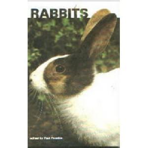 Paradise Paul: Rabbits