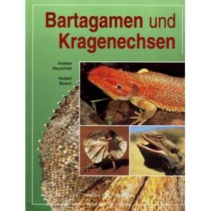 Hauschild, Bosch: Bartagamen und Kragenechsen