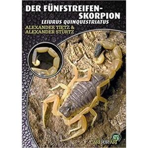 Tietz & Stürtz: Der Fünfstreifen-skorpion Leiurus quinquestriatus