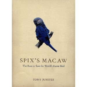 Juniper Tony: Spix's Macaw: The Race to Save the World's Rarest Bird