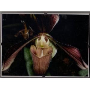 Orchidey Clip Rám 1.