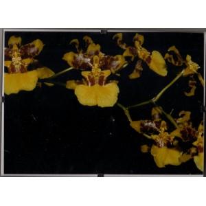 Orchidey Clip Rám 10.