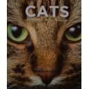 Kol.: Cats, Katzen,Chats, Katten, Gatos, Kočky - a masterpiece of nature