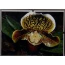 Orchidey Clip Rám 6.